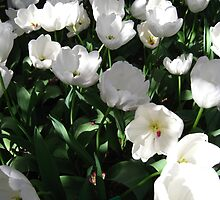 Tulip Time in Australia 10 Photograph by Heatherian by Heatherian