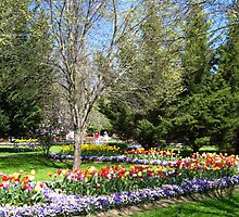Tulip Time in Australia 11 Photograph by Heatherian by Heatherian