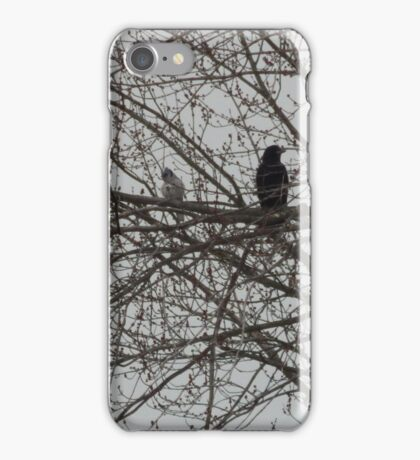 Around-the-World Animals Collection #8 / Perfect Bird Collection #17 iPhone Case/Skin