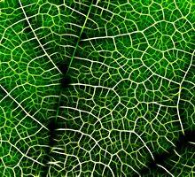 Green Leaf Macro by Nicolas Raymond