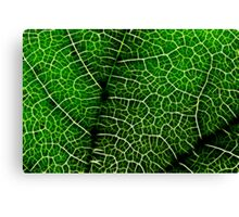 Green Leaf Macro Canvas Print