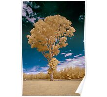 Hope Island Reserve - Infrared  Trees 2 Poster