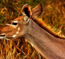Kruger Kudu by Nicolas Raymond