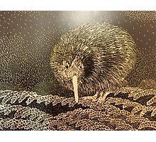 kiwi bird Photographic Print