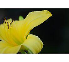 Flower : Vinsin Fotograf / Memory Maker Collection Photographic Print