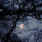Branch Moon  by mikequigley