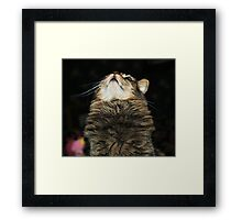 What's Up Kitty? Framed Print