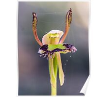 Hare Orchid Poster