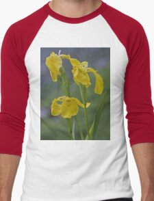 Yellow Flag Iris - Donegal Men's Baseball ¾ T-Shirt