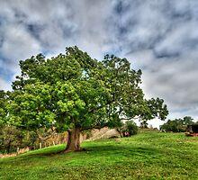 Steiglitz Tree by Danielle  Miner