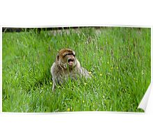 Monkey playing Poster