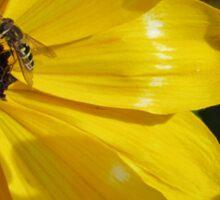 Bee Enjoying Sun on Yellow Flower Sticker