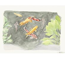 Koi Pond watercolor Photographic Print
