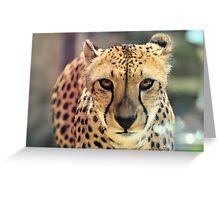Cheetah (Acinonyx jubatus) Greeting Card