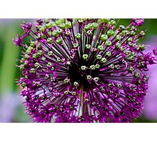 Close up Purple Flower Photographic Print