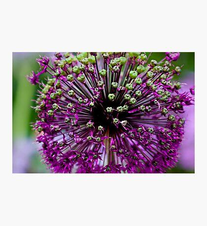 Close up Purple Flower Photographic Print