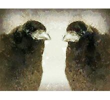 T is for ... TRUTH about Why Crows Are Cool Photographic Print