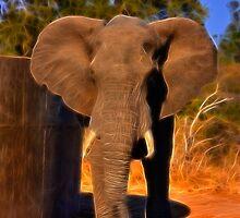 Kruger Elephant by Nicolas Raymond