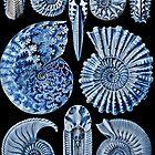 Blue Shells by dianegaddis
