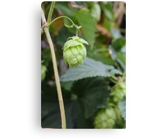 Lonely Hop Canvas Print