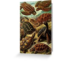 Land and Sea Turtles Greeting Card