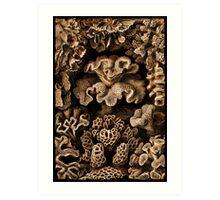 Image of Fungi and Sponges Art Print