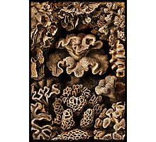 Image of Fungi and Sponges Photographic Print