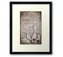 Tree Chart Plantae Protista and Animali Framed Print