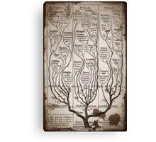 Tree Chart Plantae Protista and Animali Canvas Print