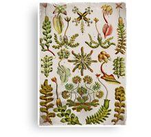 Hepaticae (leaf segments) in Green Canvas Print