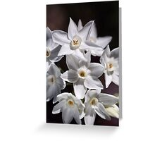 Cluster Of Paperwhite Flowers Greeting Card
