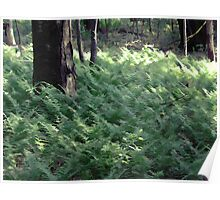 Fern Forest Poster