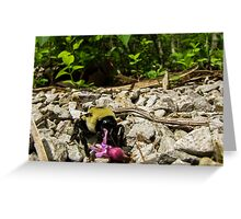 Carpenter Bee with Redbud Greeting Card