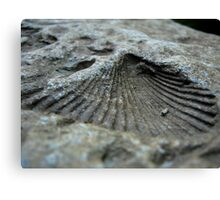 Shell Impression Canvas Print