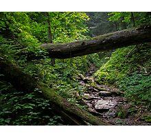 Green Ravine Photographic Print