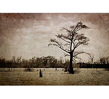 Louisiana Landscape Photographic Print