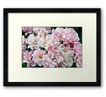 Beautiful small light pink flowers in the garden. Framed Print
