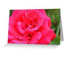 Macro on pink rose. Greeting Card