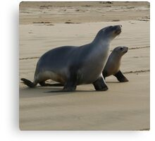 Mum and pup seals Canvas Print