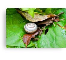 A tiny Snails abode.........Dorset UK Canvas Print