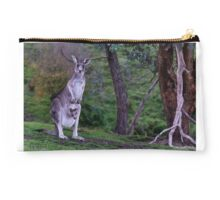 Kangaroo with Joey in her pouch - closeup Studio Pouch