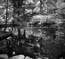 Pond in the Woods by KMyles