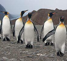 King Penguins on Parade by Marylou Badeaux