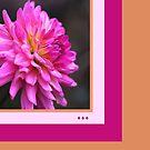 Dahlia Think Pink by Joy Watson