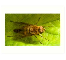 Therevidae on a strawberry leaf Art Print