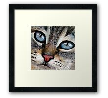 CAT - Blue Eyes Framed Print