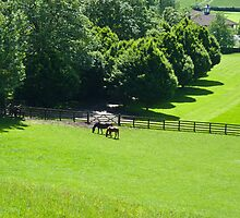 Horses grazing in Yorkshire by Robert Gipson