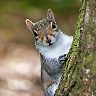 Grey Squirrel 2014 by Gill Langridge