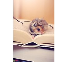 Hamster The Reader II Photographic Print