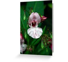 Explosive Edible Character Impatiens Glandulifera  Greeting Card
